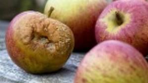 Bad apples.  BAD!