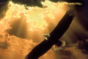 Eagle light 2