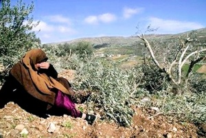 A Palestinian Arab woman laments the pruning of olive trees.
